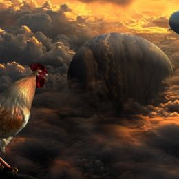 Enter The Red Dawn Rooster Picture