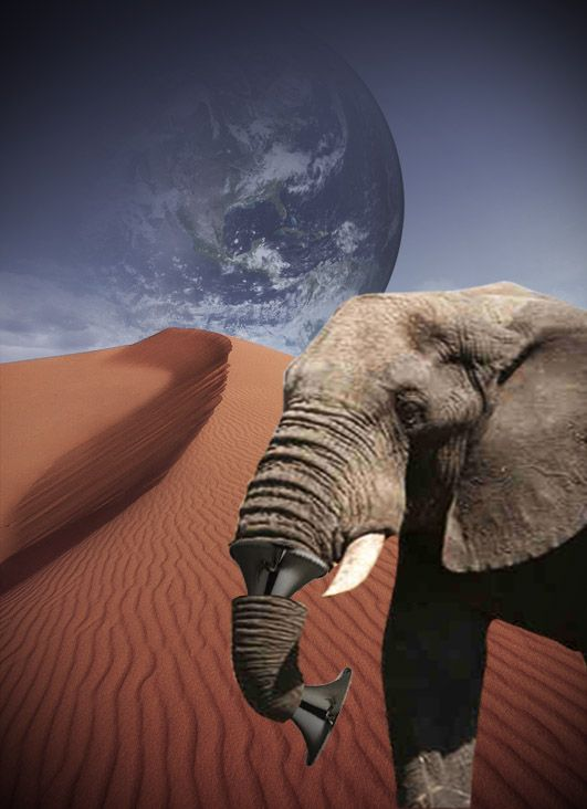 An Elephant Trumpets