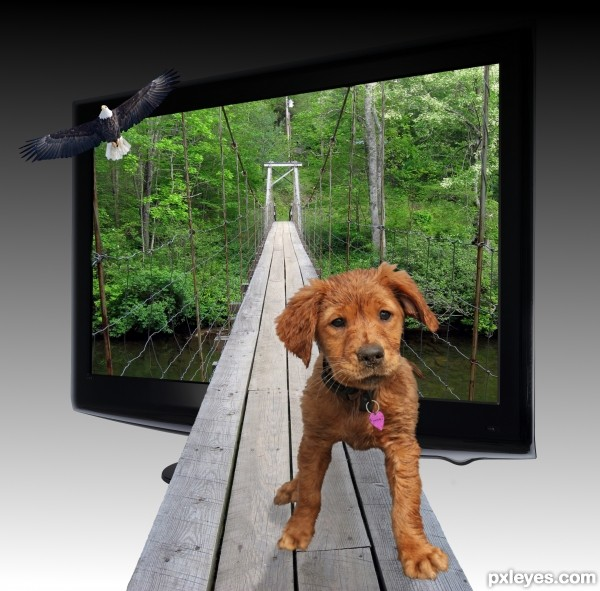 TV Bridge for Puppy