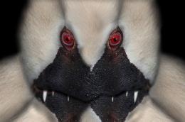 CaveMonster