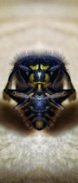 Bruiser Bee