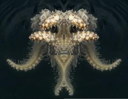 New sea monster