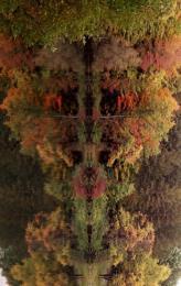 Treeant