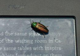 Literate beetle