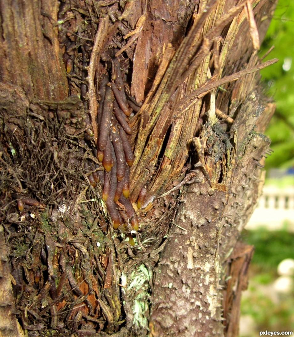 texture of tree stem