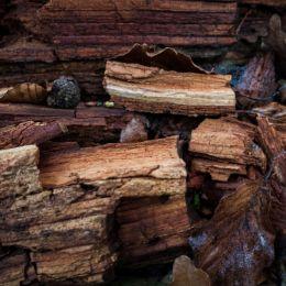Decayingwood