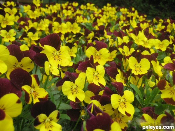 Flowers texture