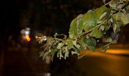 Road Side Tree