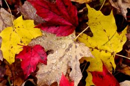 Leaf Pile