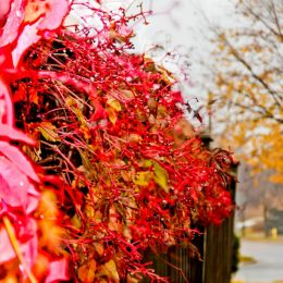 Vivid fall leaves Picture