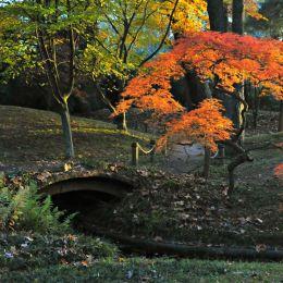 AutumnDescends