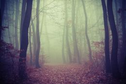 Transylvanian Forest Picture