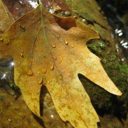 Leafinasmallcreek