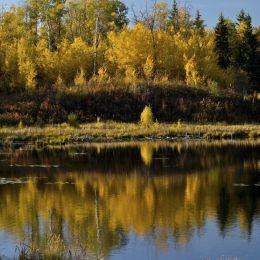 AutumnReflections