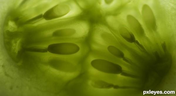 c for cucumber