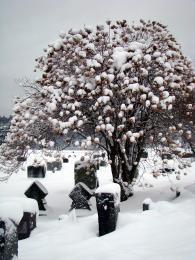 WinterCemetary