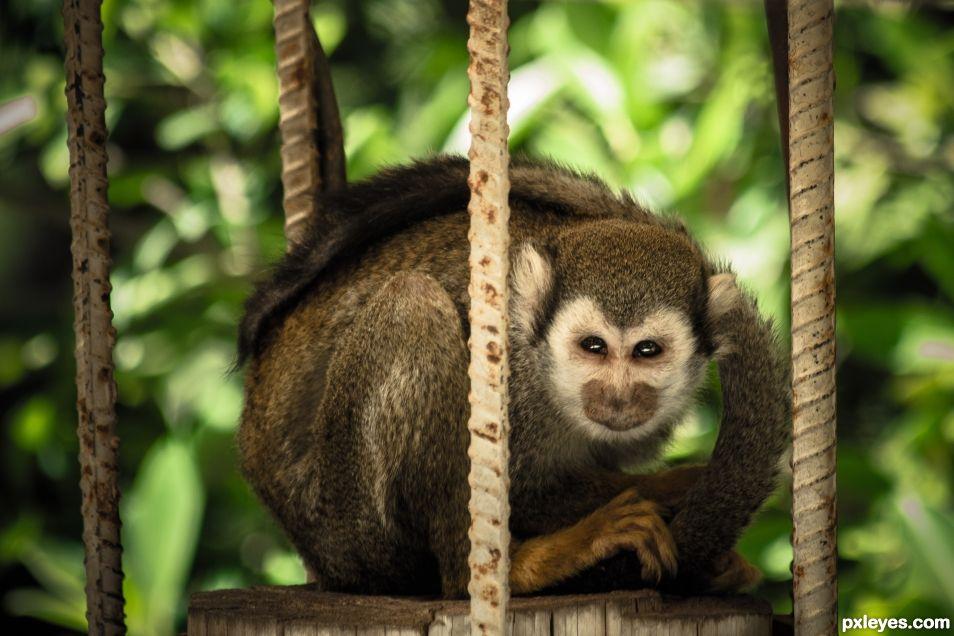 Monkey...Bars