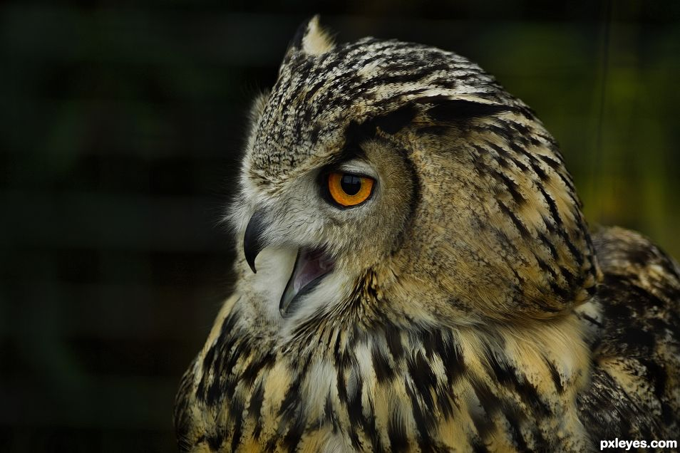 owl at the zoo
