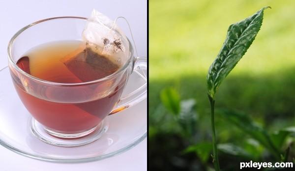 tea cup & tea leaf