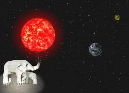 ElephantElegy