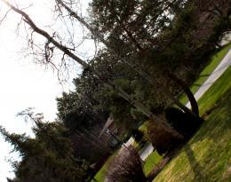 Treesaskiew