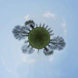 Planetofthetrees