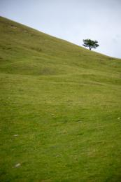 Alone in the slope...