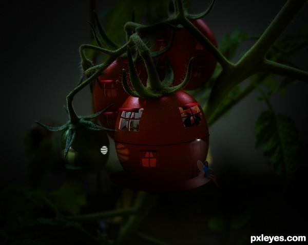 Life in Tomato