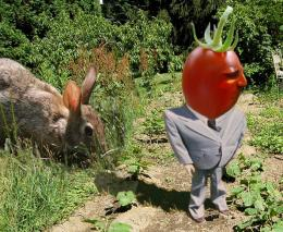 http://www.pxleyes.com/images/contests/tomato/thumbs/hey-there-mr-tomato-head-4d9405bce64d3.jpg