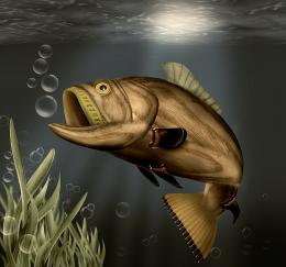 Fish Picture