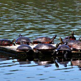 TurtleParty