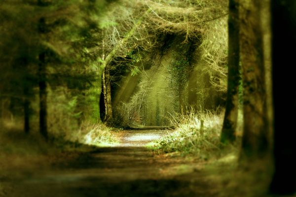 Magic woods. photoshop picture