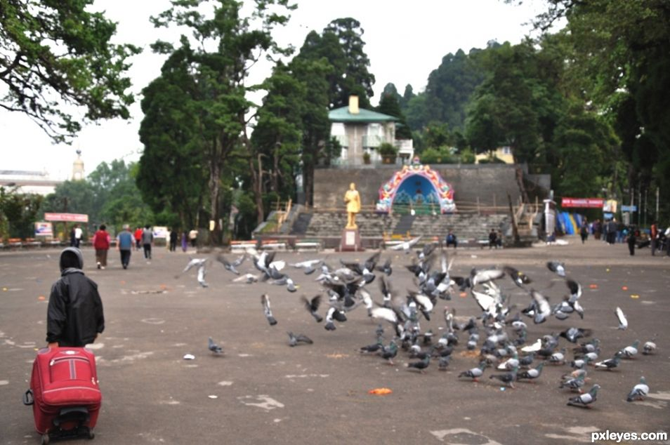 A Journey through Birds Kingdom