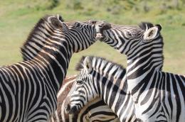 KrugerParkSouthAfrica