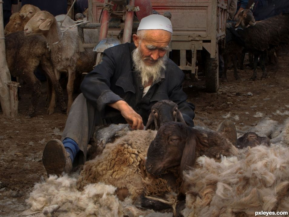 Animal Market, Silk Road , China