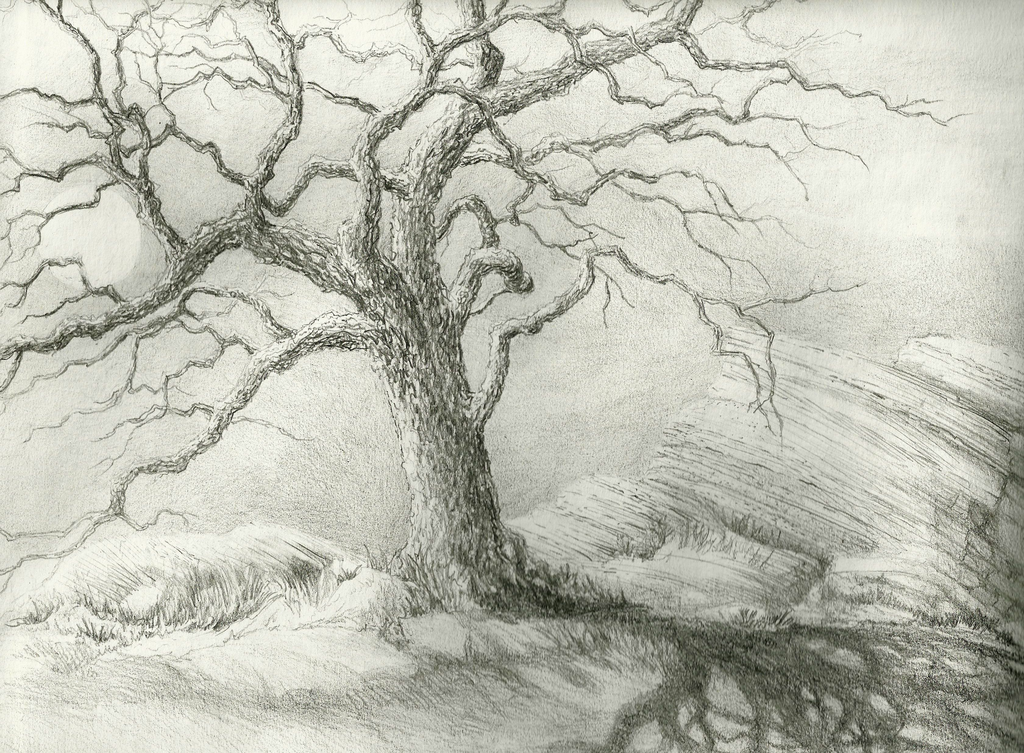 Leafless picture, by pingenvy for: tree shadows drawing ...