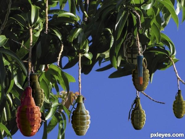 Beware of falling fruit