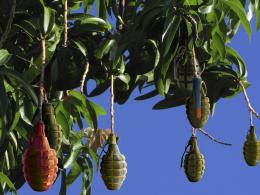 Bewareoffallingfruit