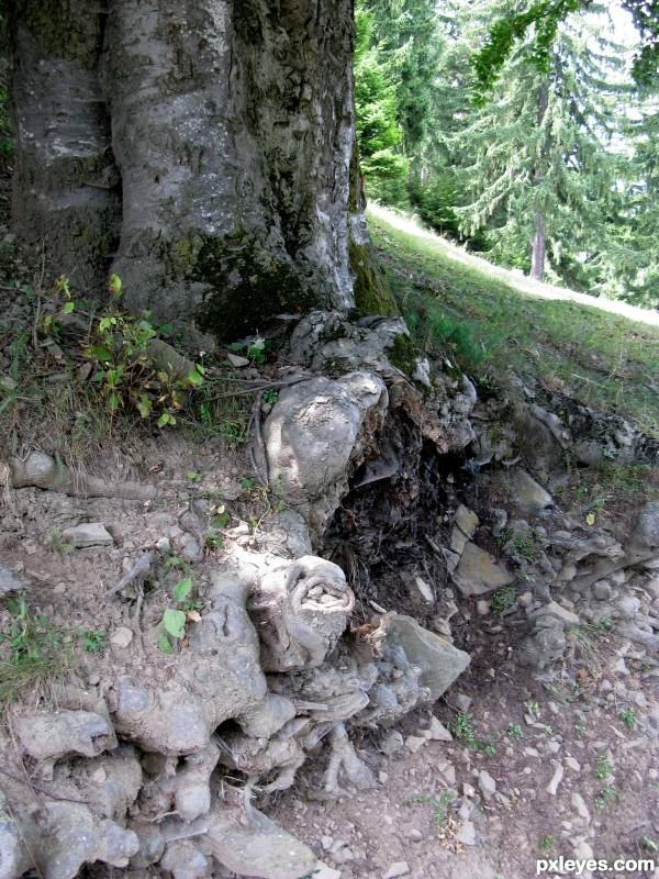 cut roots