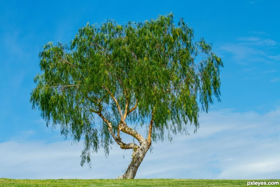 Just a Tree