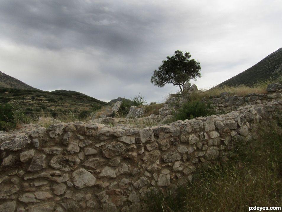 Lonely tree in Mycenes