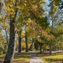 Autumntreesinthepark