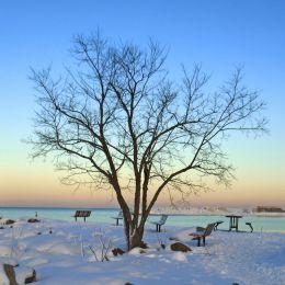 Winterdusk