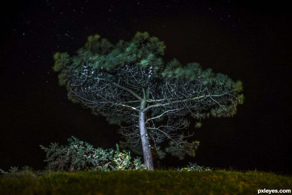 Long exposure Tree photo