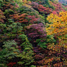 TreeTapestry