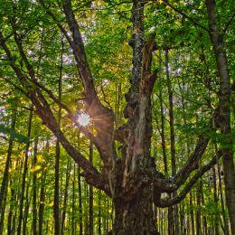 ForestGrandpa