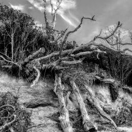 DamagedTrees