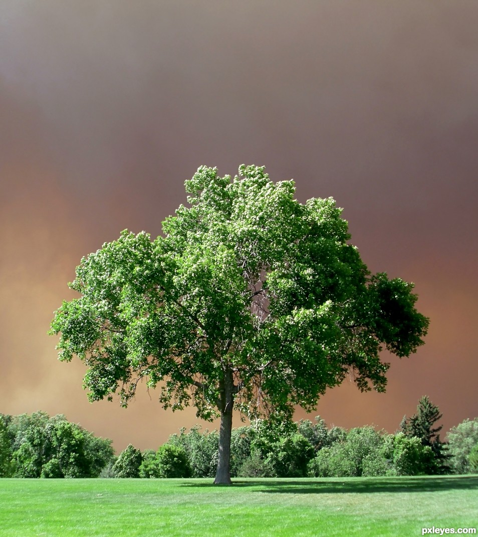 Sky Bruise Green