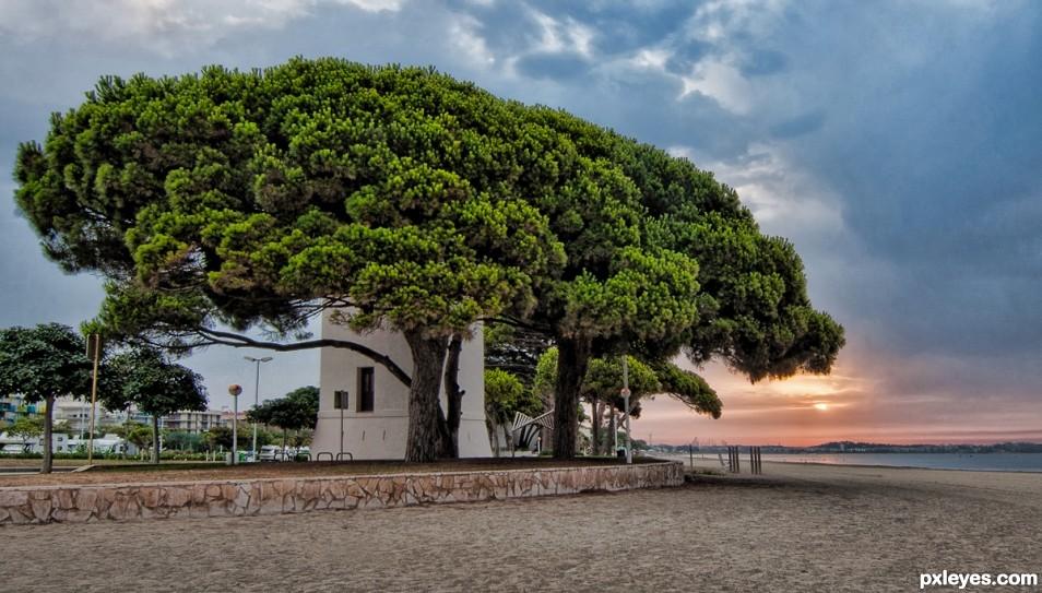 Cambrils Trees