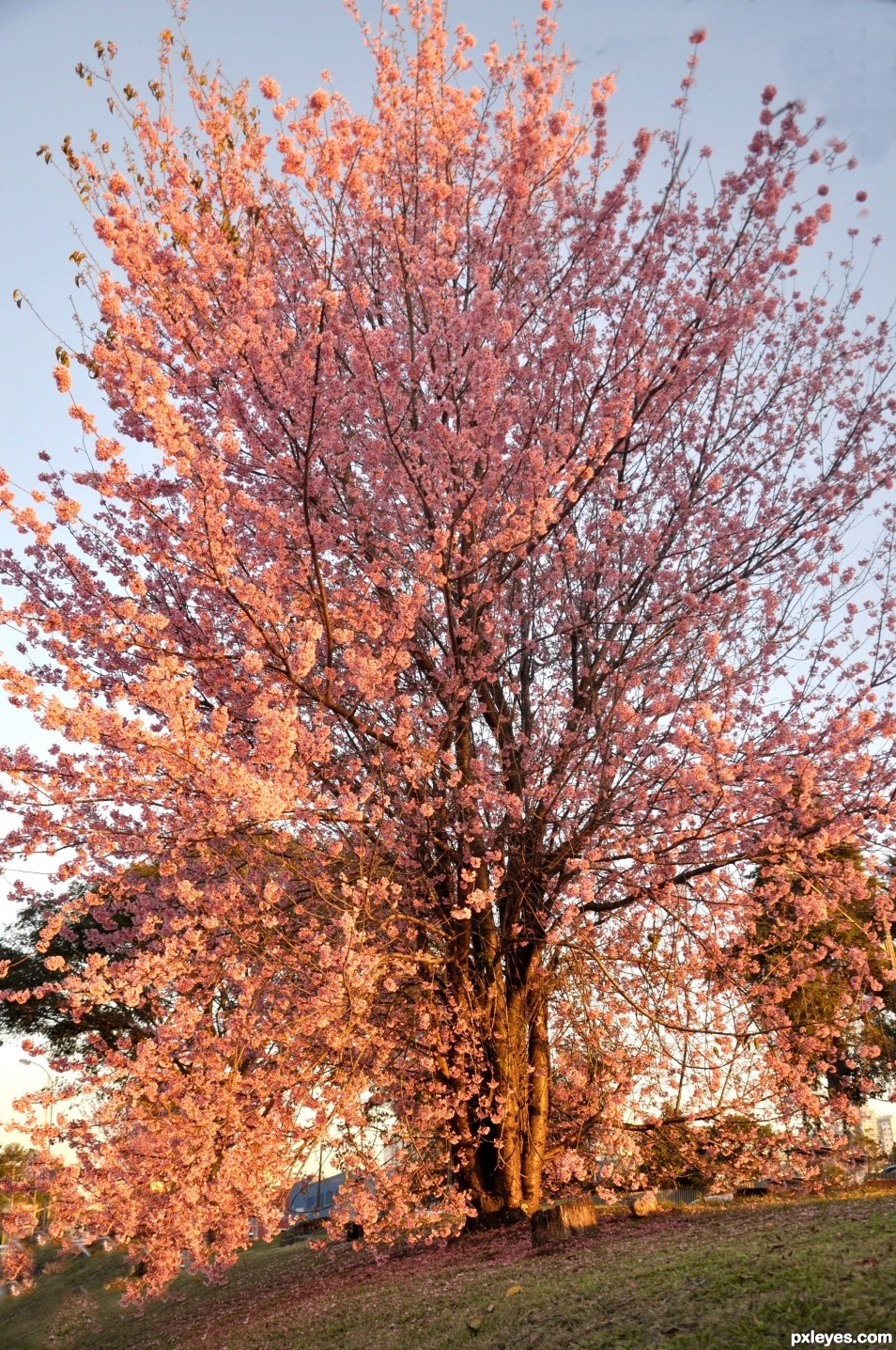 A tree of flowers